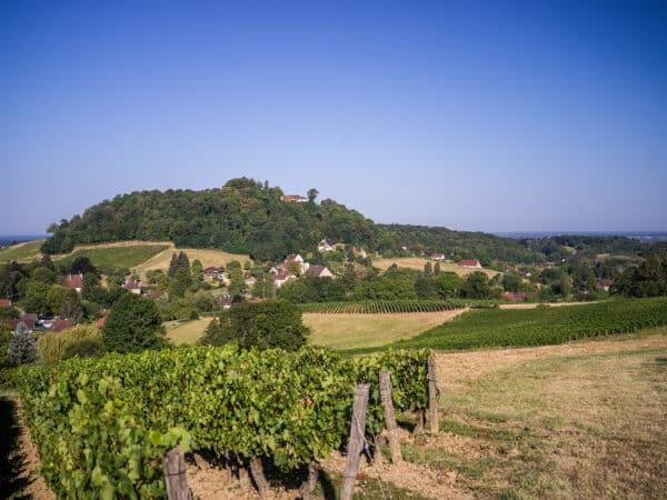 Paysages de vignes à l'Etoile