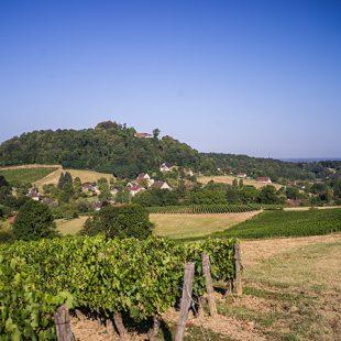 Paysage de vignes à l'Etoile