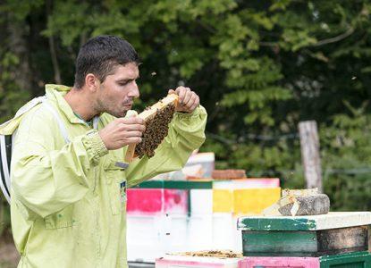 Travail de l'apiculteur Julien Compagnon