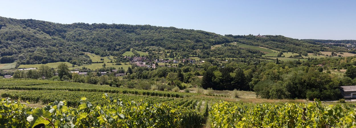 Vue du vignoble depuis la Voie verte