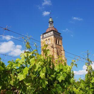 Vignes et église d'Arbois